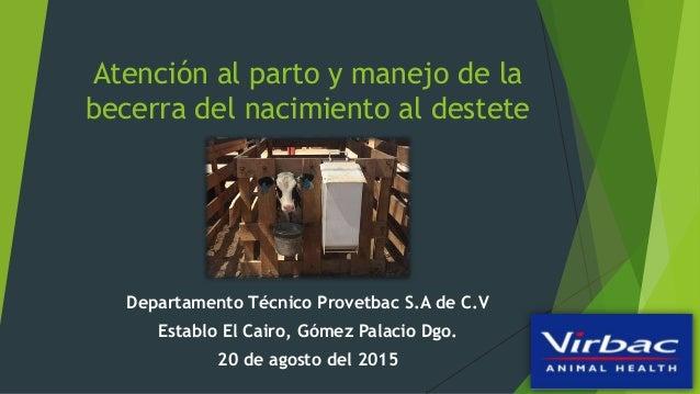 Atención al parto y manejo de la becerra del nacimiento al destete Departamento Técnico Provetbac S.A de C.V Establo El Ca...
