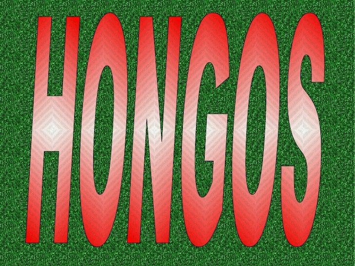 Amanita Muscaria        Amanita muscaria, también conocido          como matamoscas o falsa oronja es un          hongo ba...