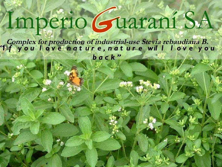 """Complex for production of industrial-use Stevia rebaudiana B. """" If you love nature, nature will love you back"""""""
