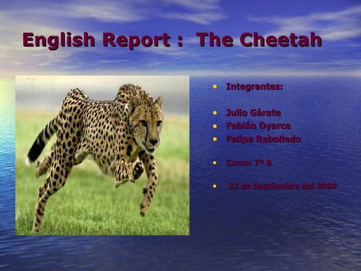 English Report :  The Cheetah <ul><li>Integrantes: </li></ul><ul><li>Julio Gárate </li></ul><ul><li>Fabián Oyarce </li></u...