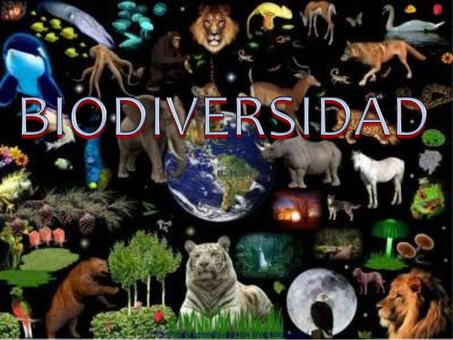 Qué es la biodiversidad y quienes laconforman