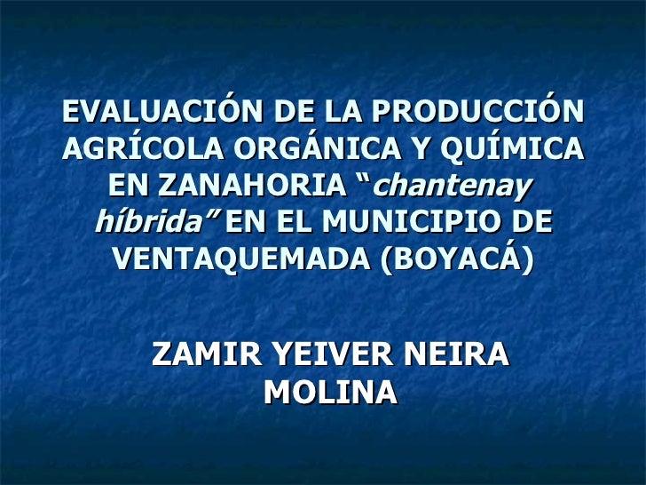"""EVALUACIÓN DE LA PRODUCCIÓN AGRÍCOLA ORGÁNICA Y QUÍMICA EN ZANAHORIA """" chantenay  híbrida""""  EN EL MUNICIPIO DE VENTAQUEMAD..."""