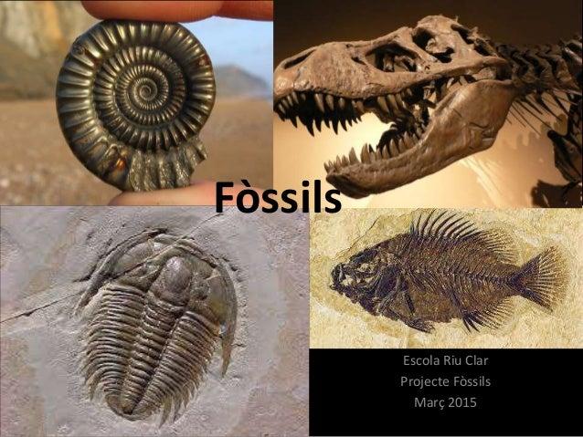 Fòssils Escola Riu Clar Projecte Fòssils Març 2015