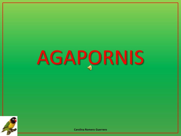 AGAPORNIS<br />Carolina Romero Guerrero<br />