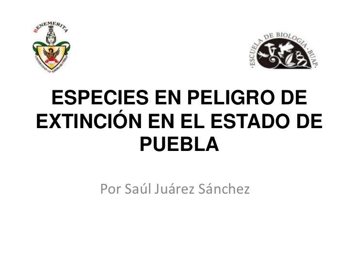 ESPECIES EN PELIGRO DEEXTINCIÓN EN EL ESTADO DE         PUEBLA     Por Saúl Juárez Sánchez