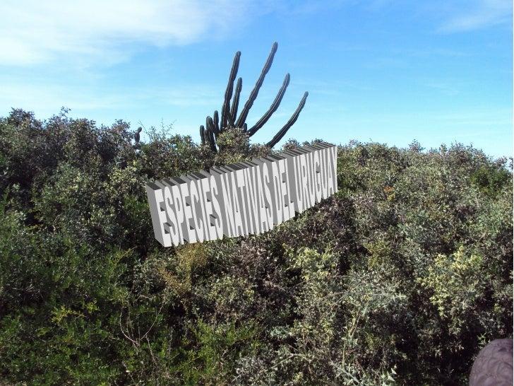 Clasificación científicaReino:    PlantaeDivisión: MagnoliophytaClase:    MagnoliopsidaOrden:    SapindalesFamilia: Anacar...