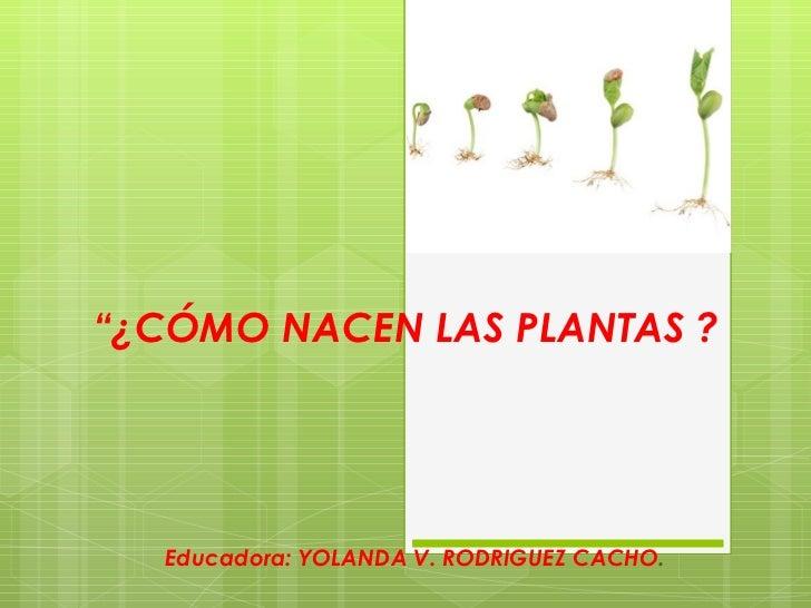 ¿ Como nacen las plantas?