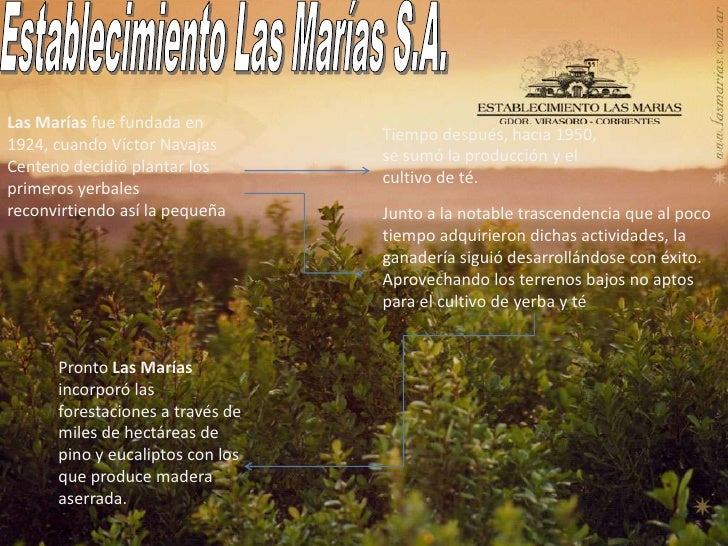 Establecimiento Las Marías S.A.<br />Las Marías fue fundada en 1924, cuando Víctor Navajas Centeno decidió plantar los pri...