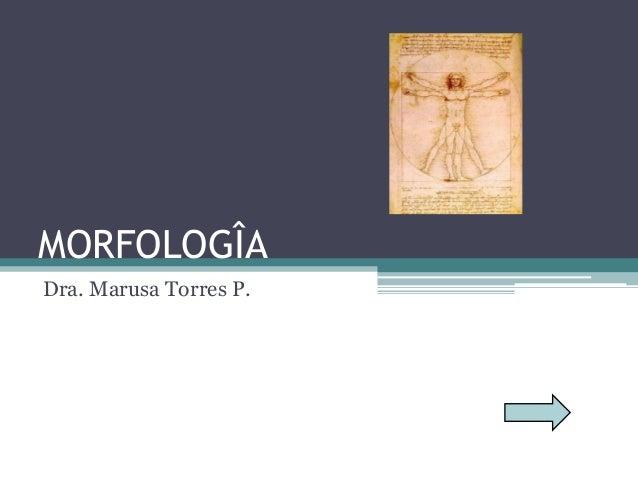MORFOLOGÎA Dra. Marusa Torres P.