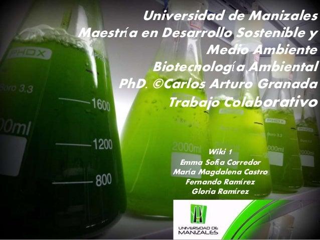 Universidad de Manizales  Maestría en Desarrollo Sostenible y  Medio Ambiente  Biotecnología Ambiental  PhD. ©Carlos Artur...