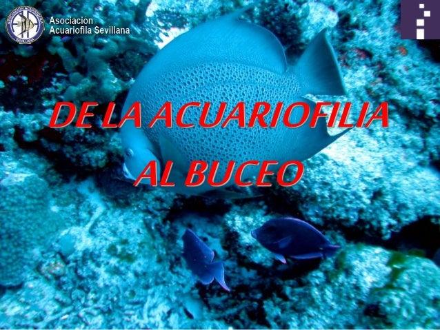 DELAACUARIOFILIA ALBUCEO