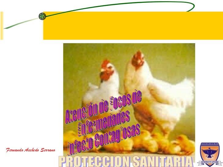PROTECCION SANITARIA Atención de Focos de  Enfermedades  Infecto Contagiosas Fernando Acebedo Serrano