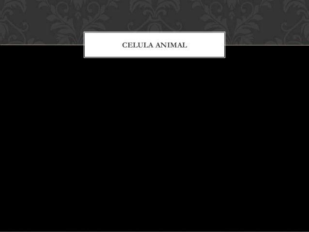 PARTES DE LA CÉLULA ANIMAL