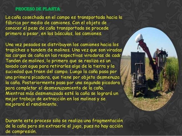 Circuito Productivo De La Caña De Azucar : Presentacion caña de azucar