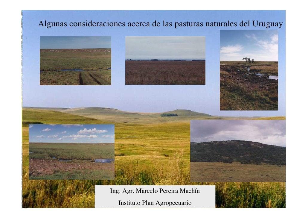 Algunas consideraciones acerca de las pasturas naturales del Uruguay                         Ing. Agr. Marcelo Pereira Mac...