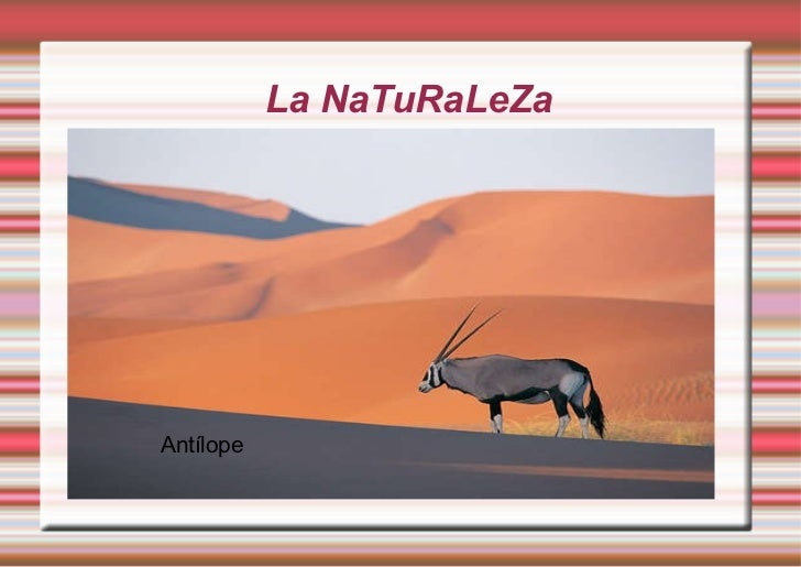La NaTuRaLeZa <ul><ul><li>paisajes </li></ul></ul>Antílope