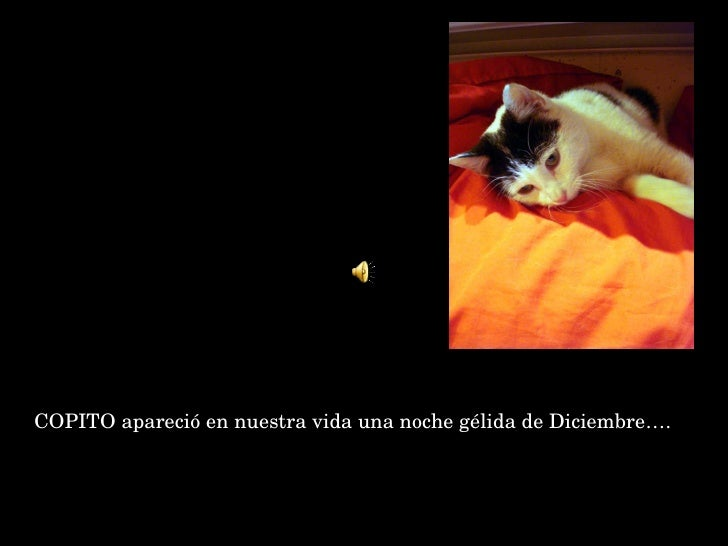 <ul><li>COPITO apareció en nuestra vida una noche gélida de Diciembre…. </li></ul>