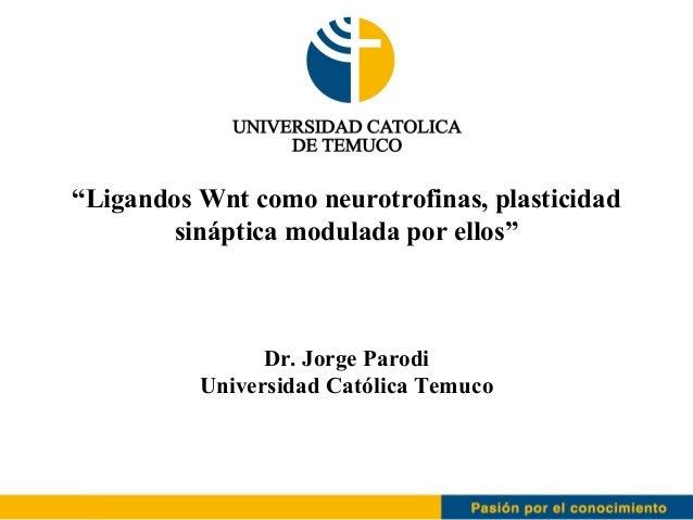"""""""Ligandos Wnt como neurotrofinas, plasticidad        sináptica modulada por ellos""""                Dr. Jorge Parodi        ..."""