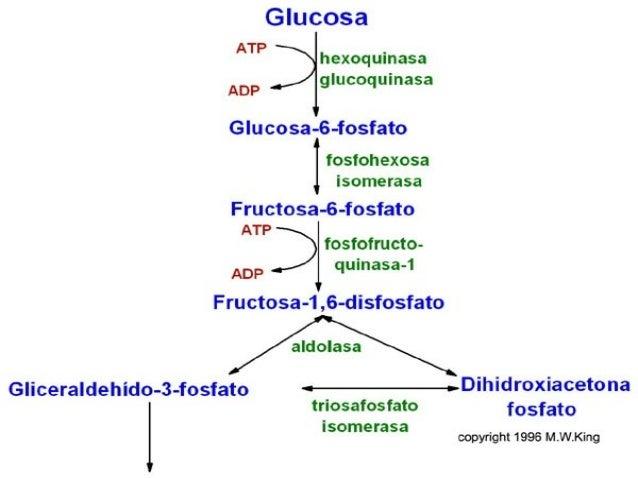 glucólisis aerobia y anaerobica