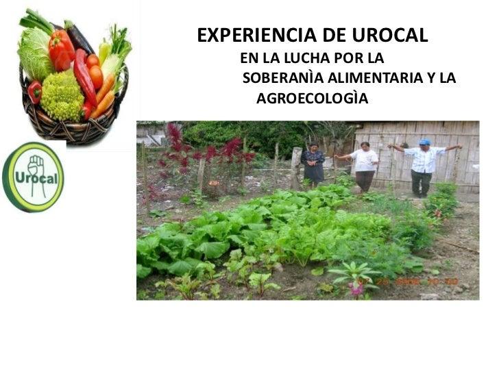 EXPERIENCIA DE UROCAL   EN LA LUCHA POR LA   SOBERANÌA ALIMENTARIA Y LA     AGROECOLOGÌA