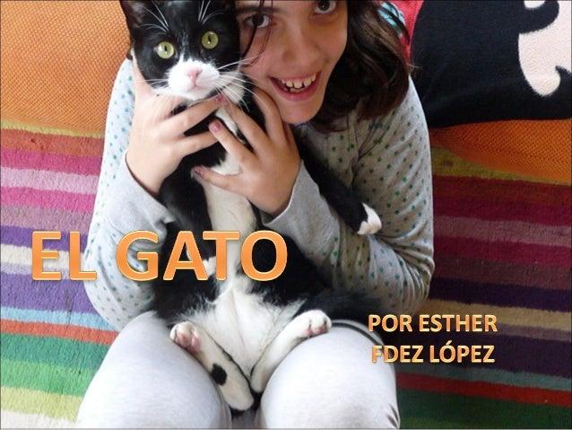 ¿Qué es?. Razas. Características de mi gato. Cuidados Alimentación. Reproducción. Web/grafía. Fin.