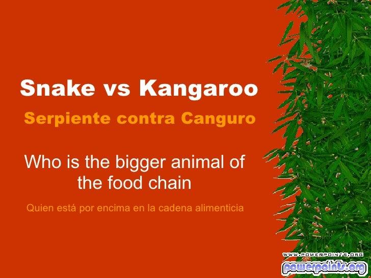 Snake vs Kangaroo Who is the bigger animal of the food chain Serpiente contra Canguro Quien está por encima en la cadena a...