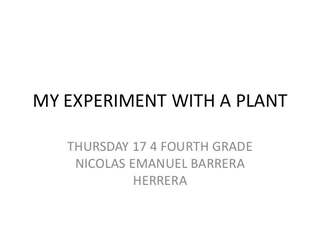 MY EXPERIMENT WITH A PLANT THURSDAY 17 4 FOURTH GRADE NICOLAS EMANUEL BARRERA HERRERA