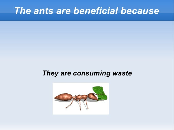 The ants are beneficial because They are consuming waste