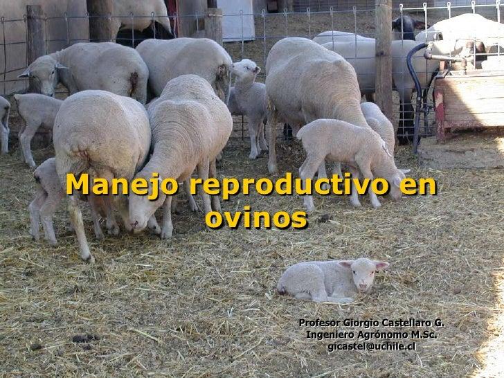 Manejo reproductivo en        ovinos             Profesor Giorgio Castellaro G.              Ingeniero Agrónomo M.Sc.     ...