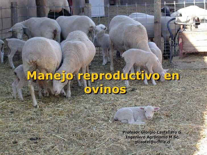 Presentacion manejo reproductivo_en_ovinos