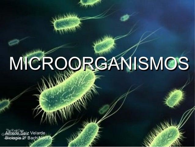 Presentacion microorganismos