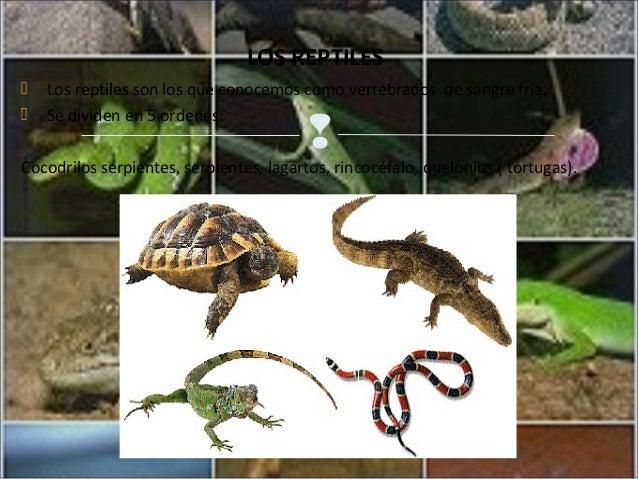 Q Son Los Reptiles Los reptiles son los que