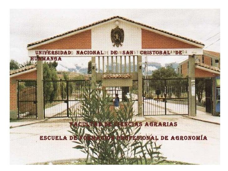 FACULTAD DE CIENCIAS AGRARIAS ESCUELA DE FORMACION PROFESIONAL DE AGRONOMÍA UNIVERSIDAD  NACIONAL  DE  SAN  CRISTOBAL  DE ...