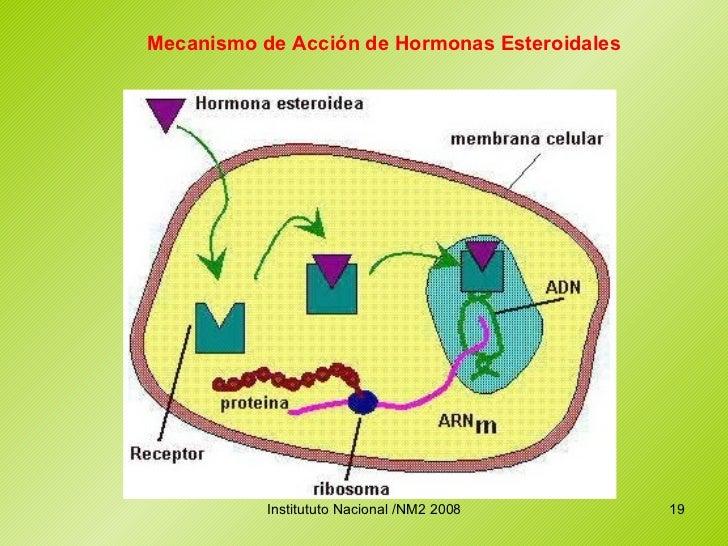 hormonas esteroidales