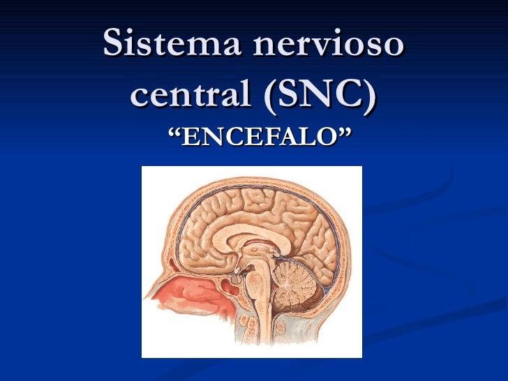 Presentacion sistema nervioso central 3° medio 2011