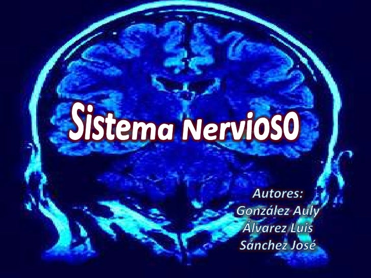 Sistema Nervioso<br />Autores:<br />González Auly<br />Álvarez Luis<br />Sánchez José<br />