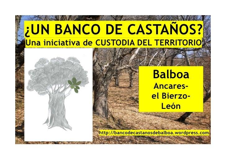 ¿UN BANCO DE CASTAÑOS?Una iniciativa de CUSTODIA DEL TERRITORIO                                      Balboa               ...