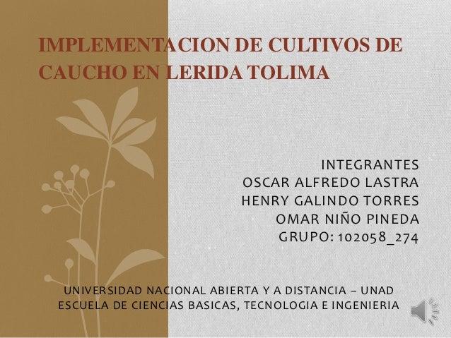 IMPLEMENTACION DE CULTIVOS DECAUCHO EN LERIDA TOLIMA                                     INTEGRANTES                      ...
