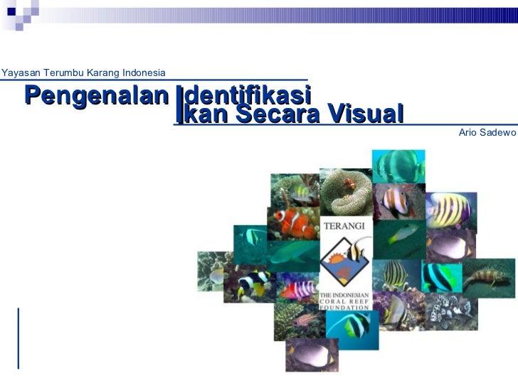 Pengenalan  dentifikasi kan Secara Visual I Yayasan Terumbu Karang Indonesia Ario Sadewo