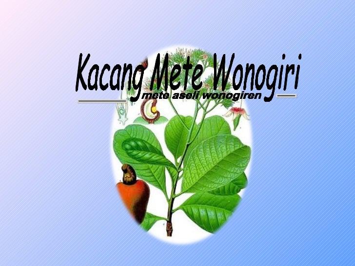 Sekilas Mengenai Kami             Kacang mete Wonogiri adalah sebuah industri             rumahan yang berbasis web serta ...