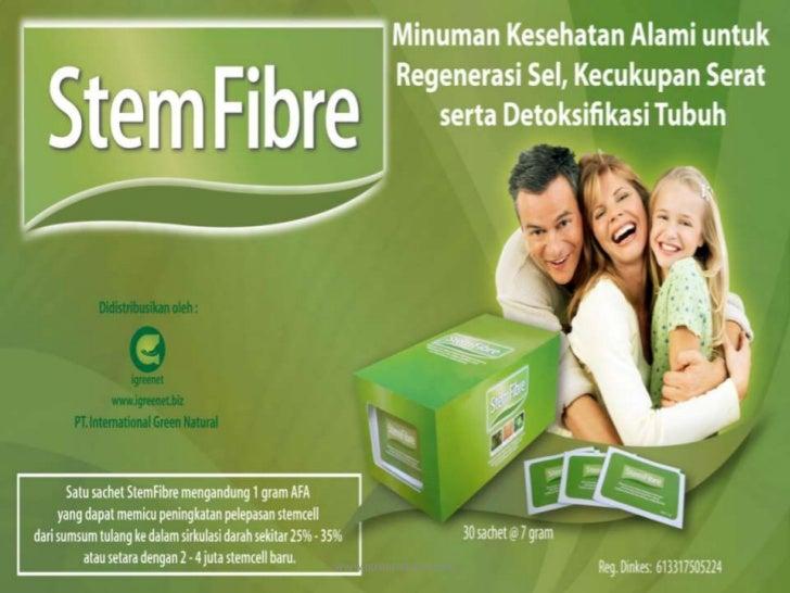 Presentasi stem fibre
