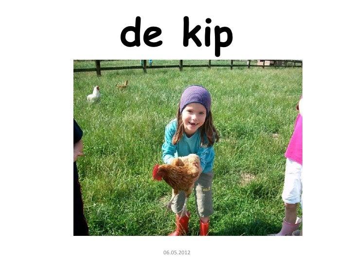 Spreekbeurt van Ada: de kip
