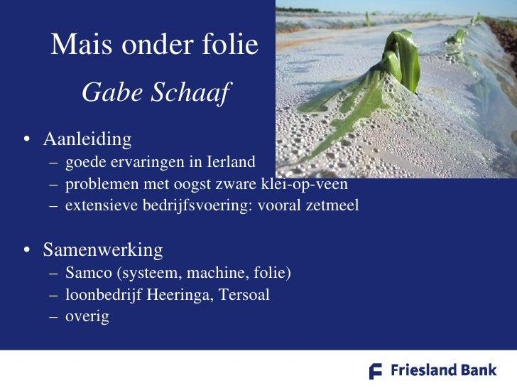 Mais onder folie Gabe Schaaf <ul><li>Aanleiding </li></ul><ul><ul><li>goede ervaringen in Ierland </li></ul></ul><ul><ul><...