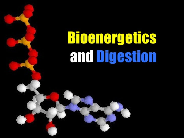 Bioenergetics  and  Digestion