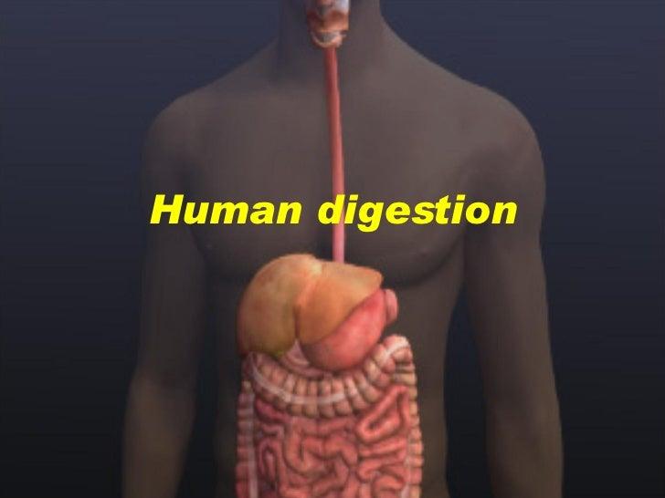 Presentation 06 - Human Digestion