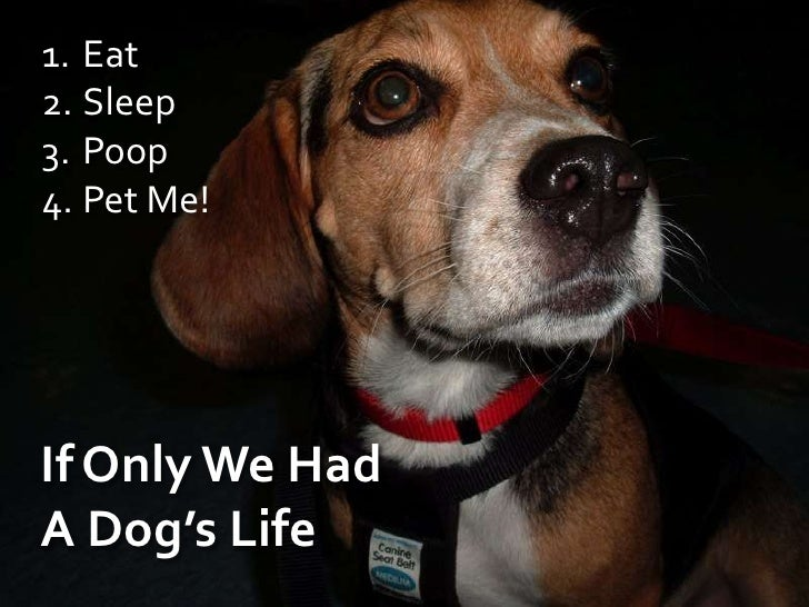 Eat<br />Sleep<br />Poop<br />Pet Me!<br />If Only We Had A Dog's Life<br />