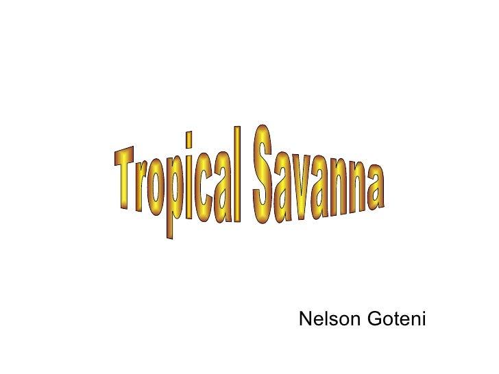 Tropical Savanna Nelson Goteni