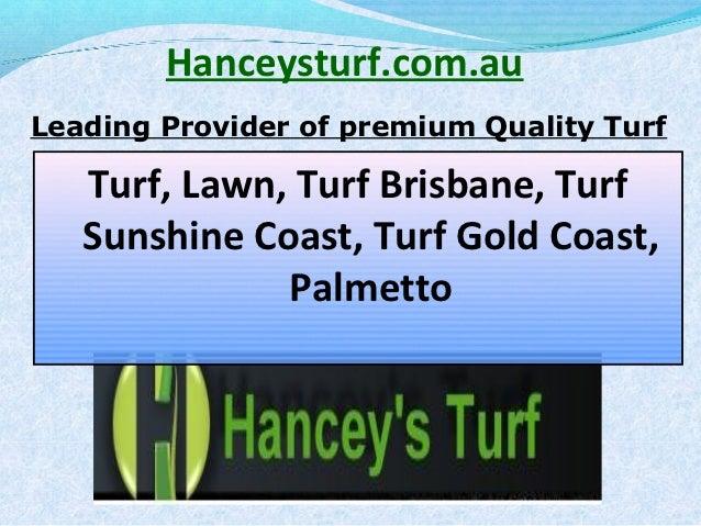 Hanceysturf.com.auLeading Provider of premium Quality Turf   Turf, Lawn, Turf Brisbane, Turf   Sunshine Coast, Turf Gold C...