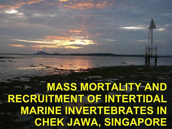 MASS MORTALITY AND RECRUITMENT OF INTERTIDAL MARINE INVERTEBRATES IN CHEK JAWA, SINGAPORE