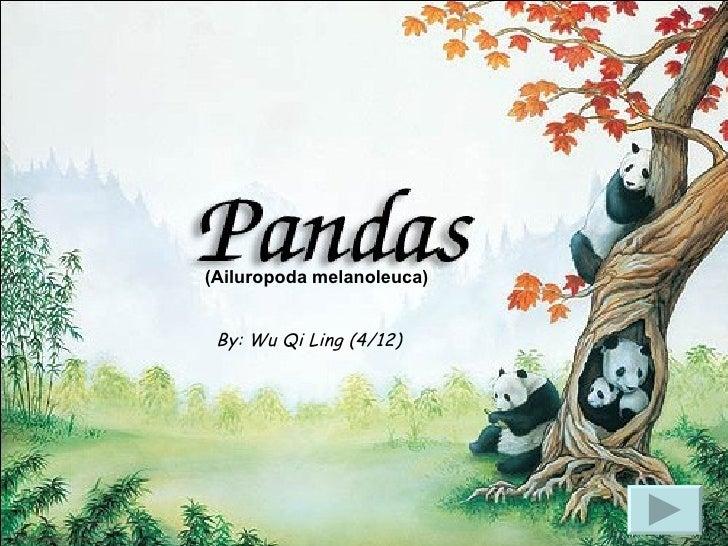 By: Wu Qi Ling (4/12) (Ailuropoda melanoleuca)